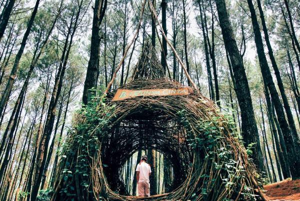 印尼日惹pinus pengger松林成为当地ig热门打卡地