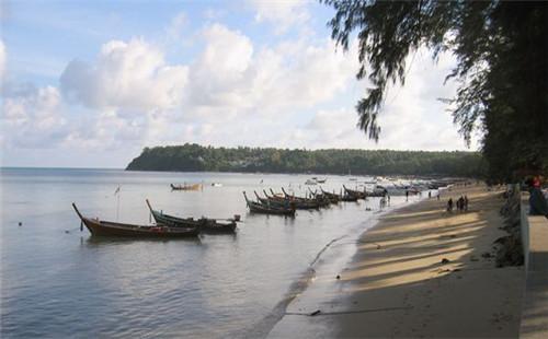 海边大树风景图片