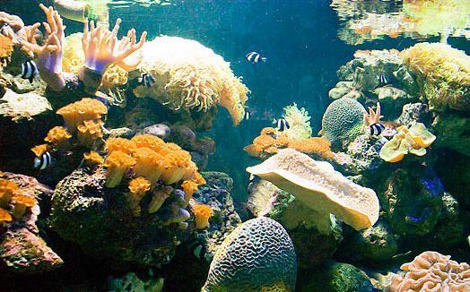兰卡威海底世界简介,马来西亚自由行之海底世界游玩,购物,住宿指南